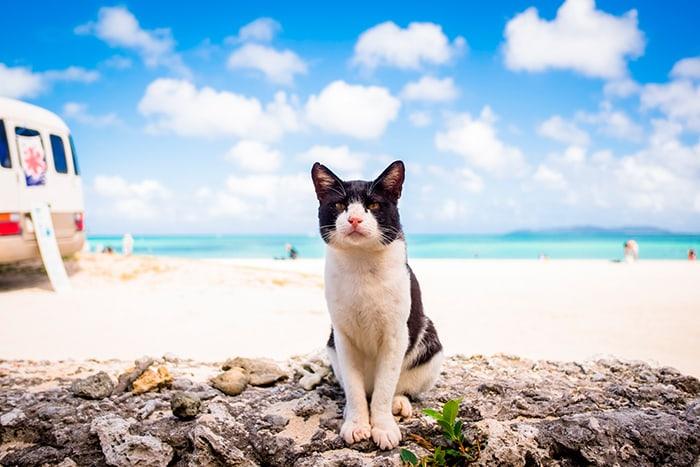 уличный кот на пляже