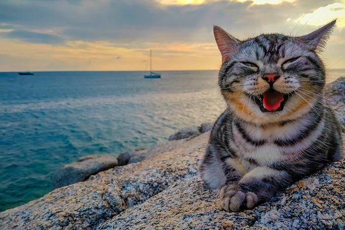 довольный кот у моря