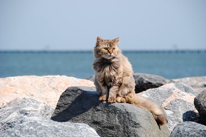 кот на камнях