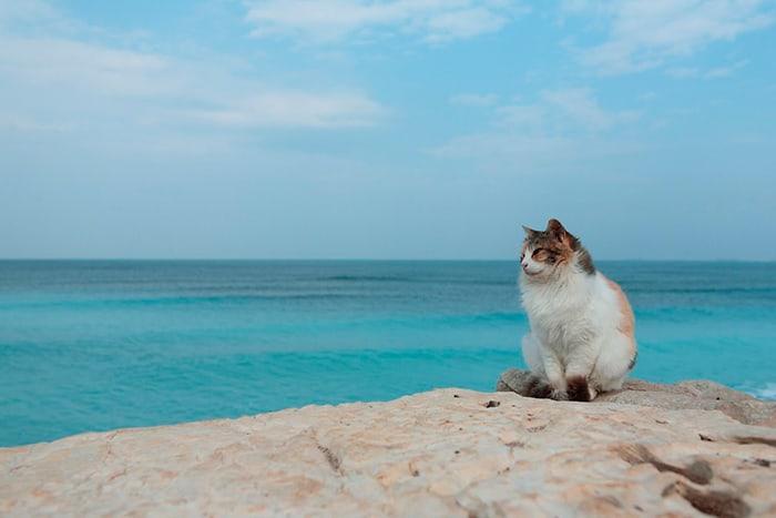 пушистый кот у голубого моря