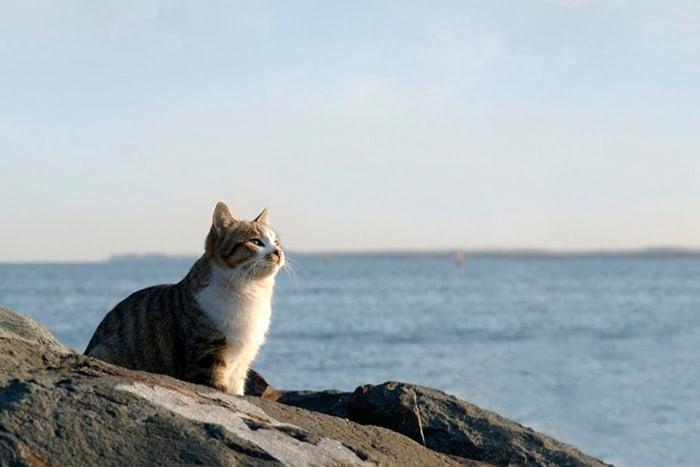 кот на камнях у моря
