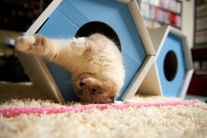 Кошка играет в деревянном домике