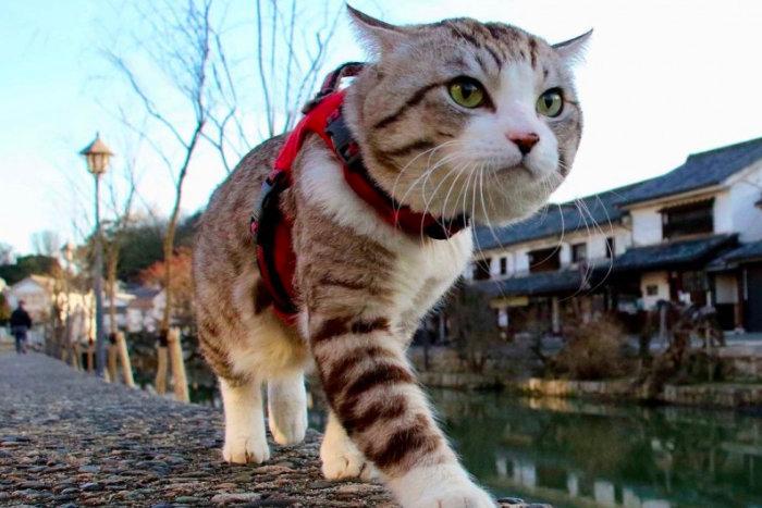 Кошка гуляет около японской реки