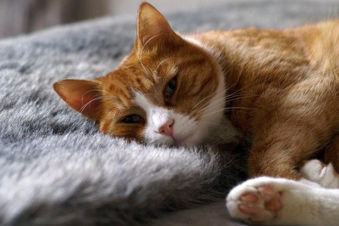 Как понять, что кошка заболела: тревожные симптомы