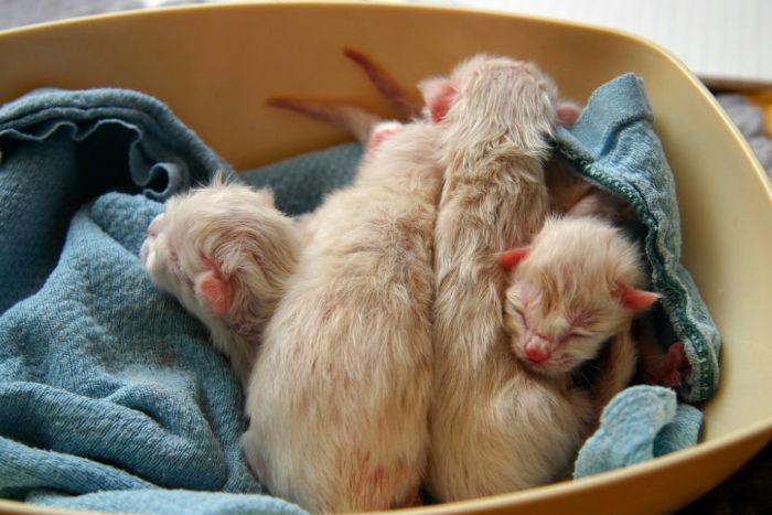 Как ухаживать зановорожденными котятами