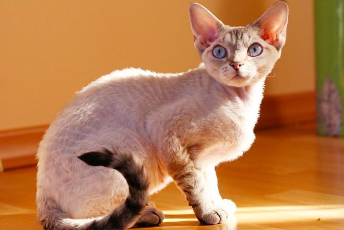 Кудрявый кот сидит на солнышке